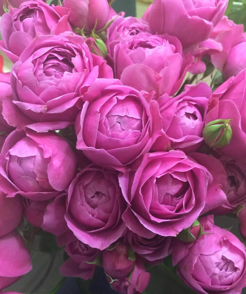 Купить розы морнинг дью
